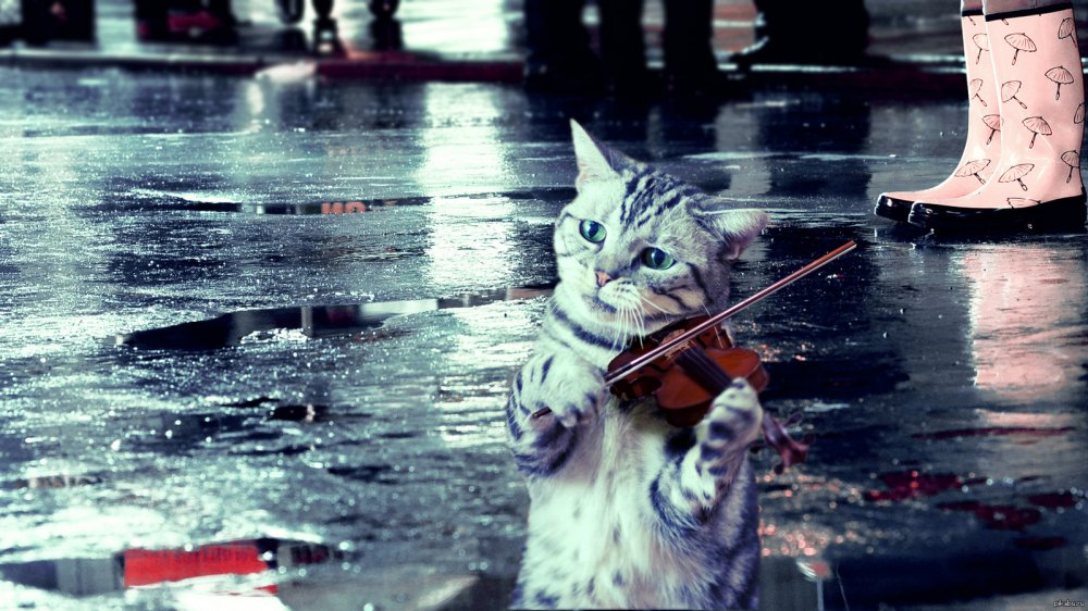 cat in the rain marriage and Essay on cat in the rain symbolism in cat in the rain in his the opening paragraph describes the crisis that exists in the marriage of the cat symbolically.
